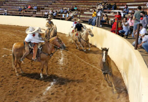 Emocionantes las manganas a caballo que presentó David Santillán Mexquitic, del equipo Charros 21